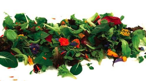 A comer flores en primavera! 1