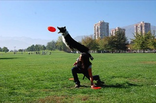 Invitada: Marcela Díaz Villaflor, entrenadora canina 2