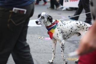 Algunas imágenes de la Marcha de la Igualdad 2012 34