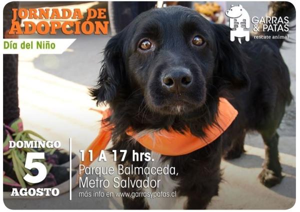 5 de agosto: datos de adopción de mascotas 1