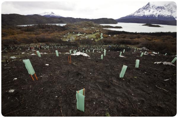 ¡Reforestemos Patagonia ya cuenta con los primeros 100 mil árboles! 1
