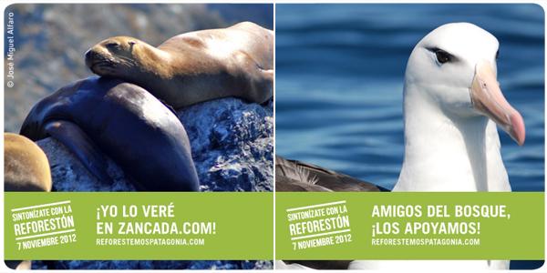 Reforestón, campaña para reforestar Patagonia  1