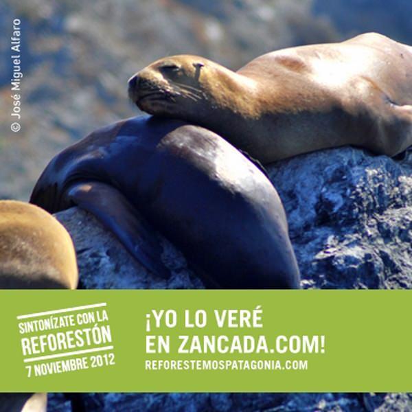 Reforestemos Patagonia: Llegó el día de La Reforestón 3