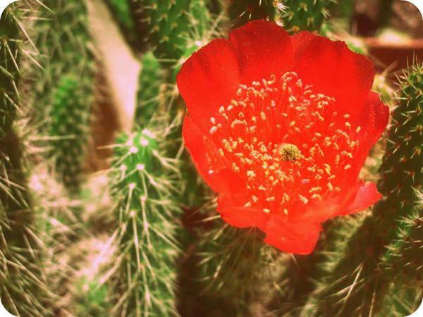 Álbum Zancada: Flor de Navidad 3