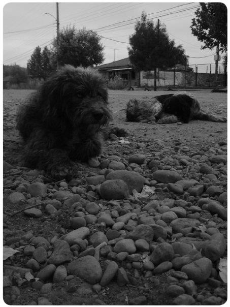 Álbum Zancada: vida de perros 1