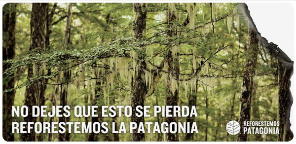 Reforestemos Patagonia: sintonízate con la reforestón vía streaming 1