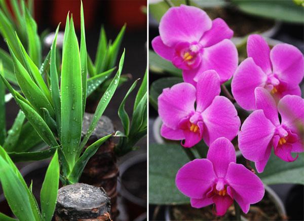 Qu plantas de interior elegir para tu casa o for Vivero hijuelas