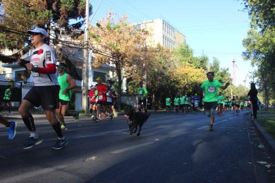 Fotos del Maratón de Santiago 2015 152