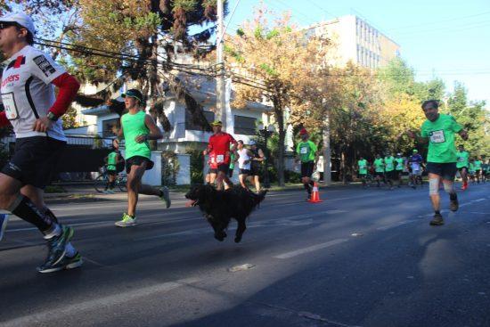 Fotos del Maratón de Santiago 2015 151