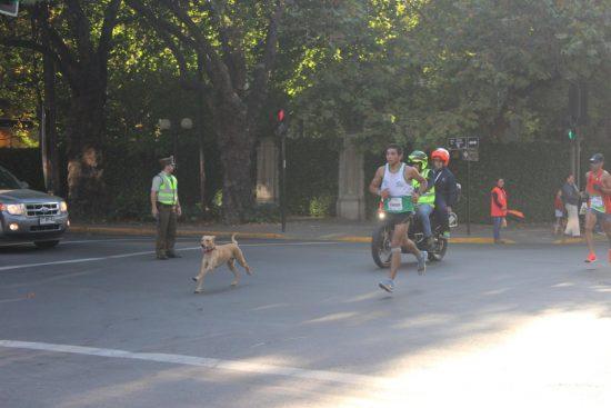 Fotos del Maratón de Santiago 2015 204