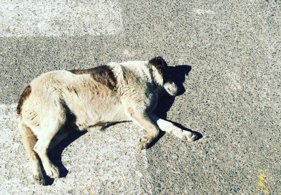 Ley de tenencia responsable de mascotas: a un paso de ser realidad 1