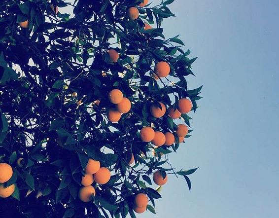 Jugo natural de naranjas todas las mañanas 1