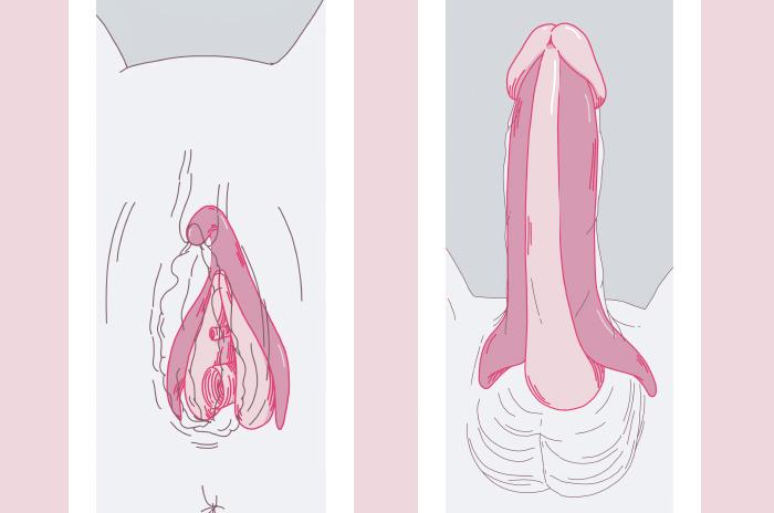 Una importante precisión en la anatomía íntima del placer 1