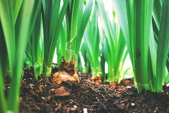Tips para cuidar tu jardín en otoño 2