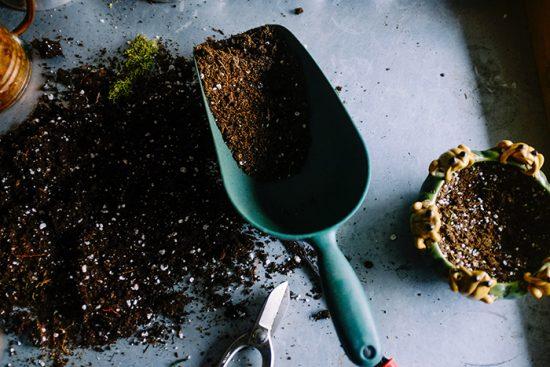 Tips para cuidar tu jardín en otoño 1