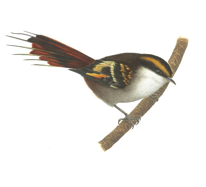 Ilustración: Las aves de Ignacio del Real 1