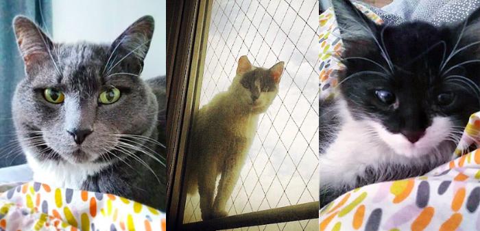 Mascotas & compañer@s: Bombom, Cerati, Ramen y Marcela 1