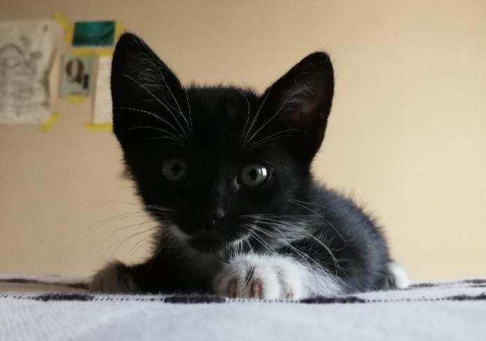 Mascotas & compañeras: Monrix y Gal 2