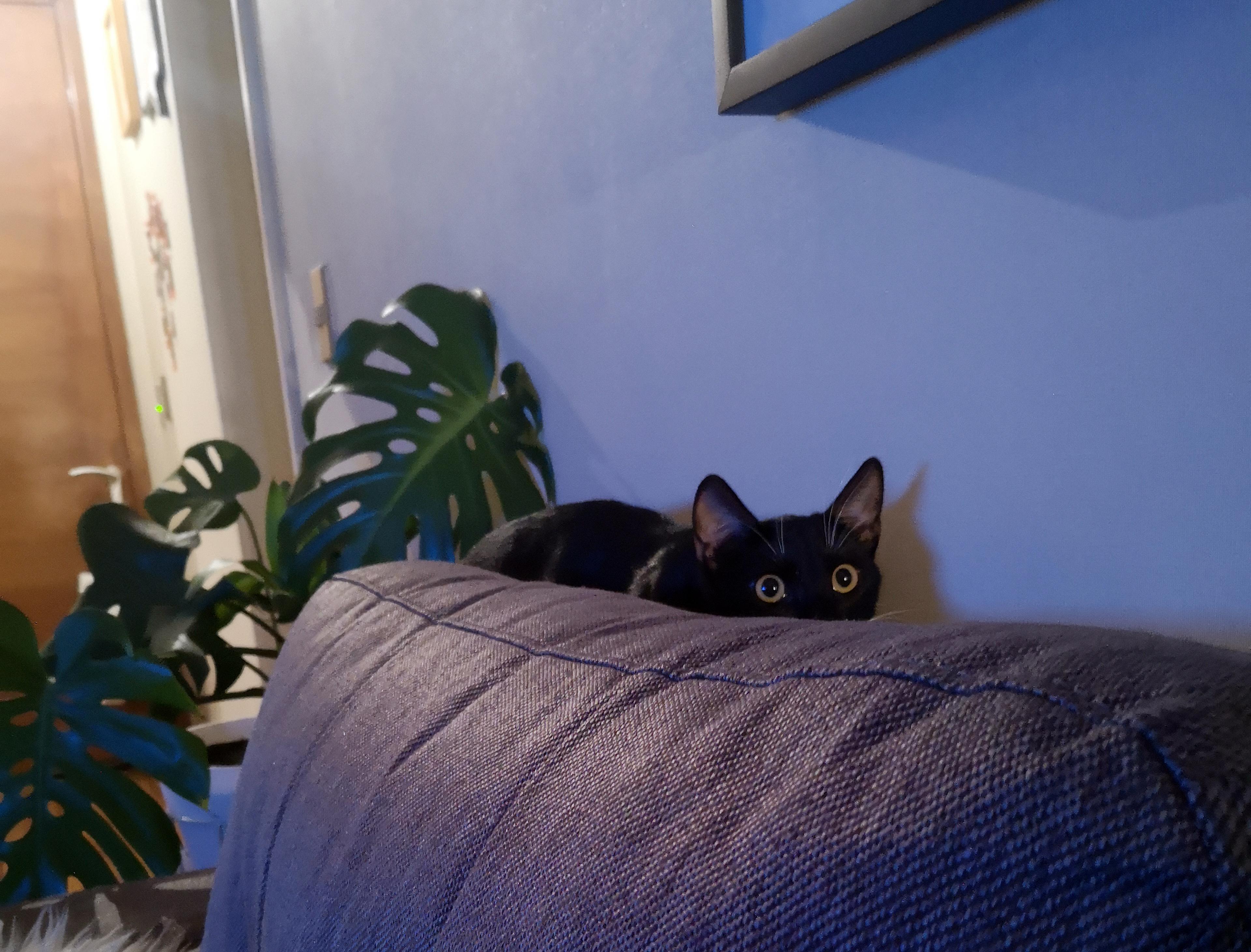 Mascotas & compañeras: Monrix y Gal 3
