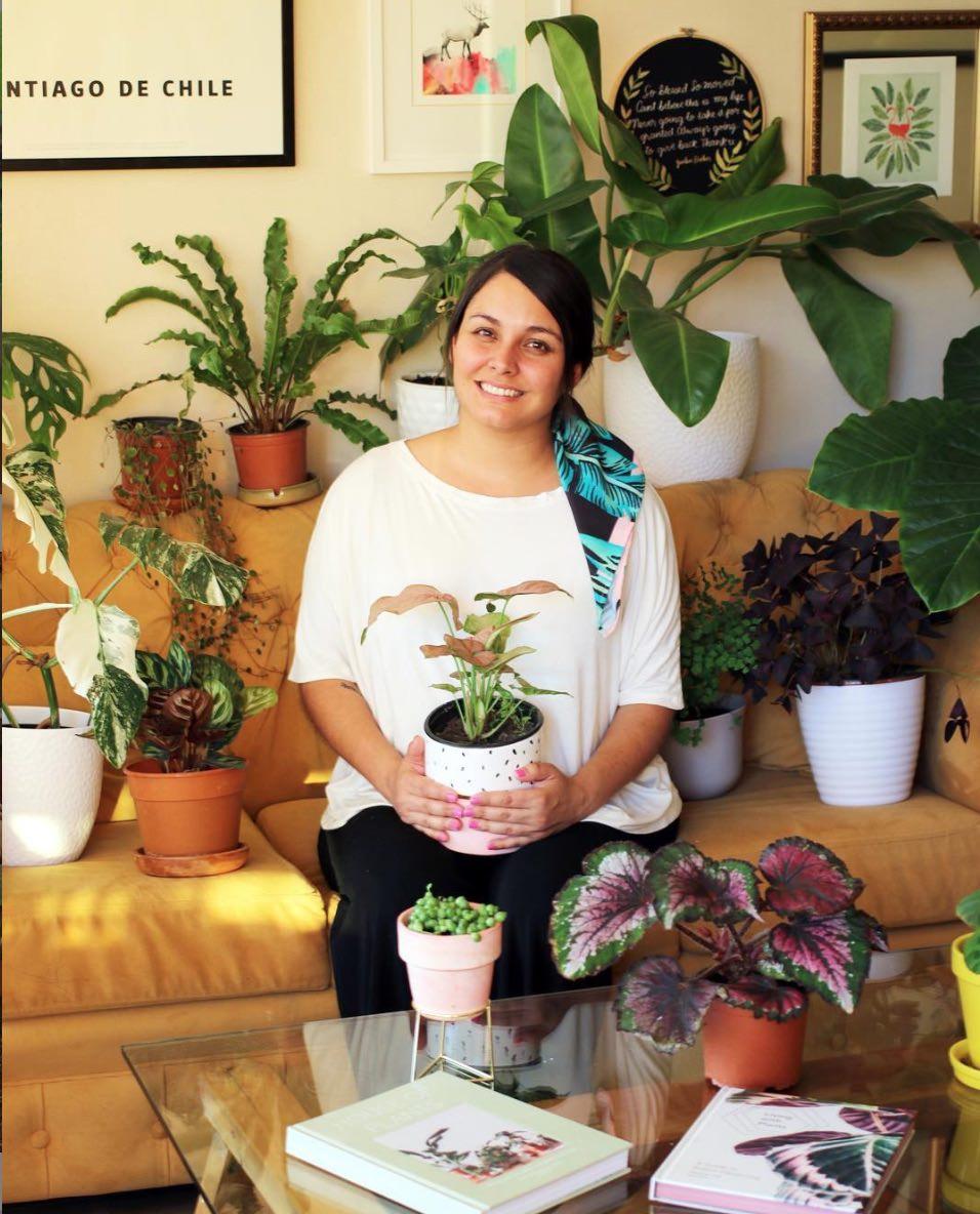 Mi pasión: las plantas de interior (tips de cuidados, variedades y dónde comprar) 1
