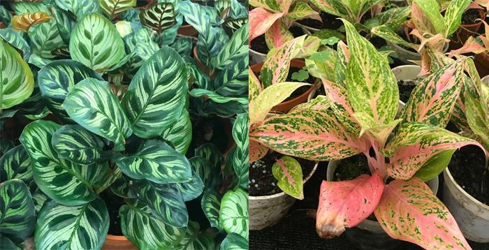 Mi pasión: las plantas de interior (tips de cuidados, variedades y dónde comprar) 5