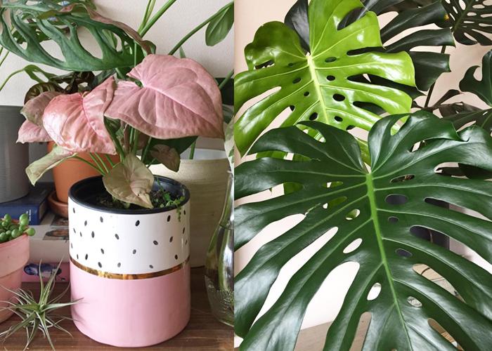 Mi pasión: las plantas de interior (tips de cuidados, variedades y dónde comprar) 2
