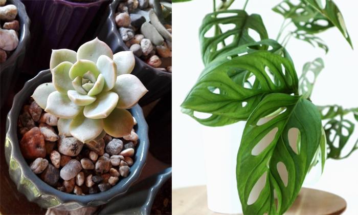 Mi pasión: las plantas de interior (tips de cuidados, variedades y dónde comprar) 6