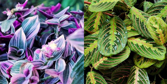 Mi pasión: las plantas de interior (tips de cuidados, variedades y dónde comprar) 4