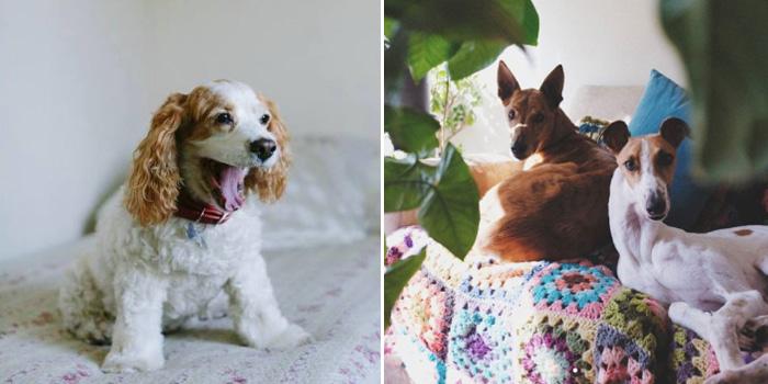 """""""Sólo necesito un perro (o muchos)"""", una guía para entender, amar y cuidar a tu perro 3"""