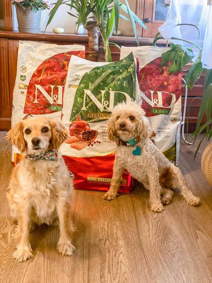 ¿Por qué es bueno dar a tu mascota alimento libre de granos (grain free)? 1