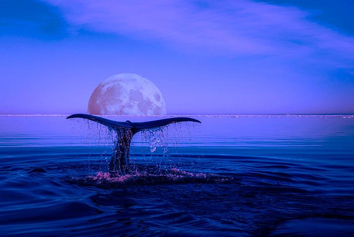 Luna arte