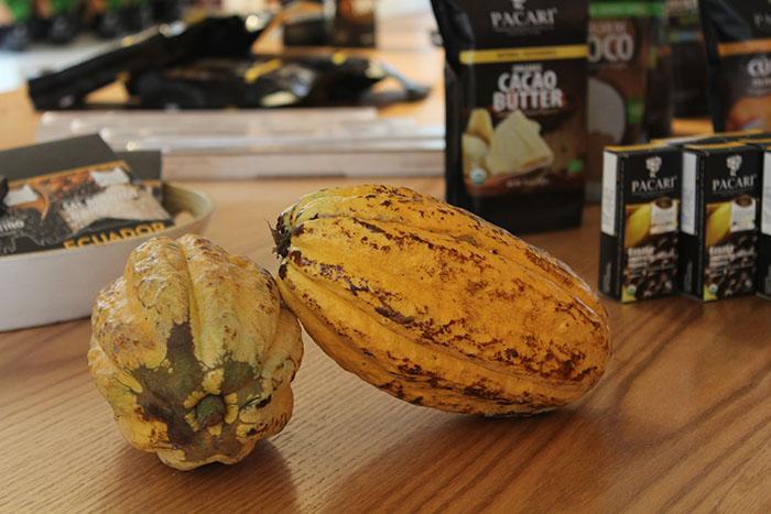 cata de chocolate online