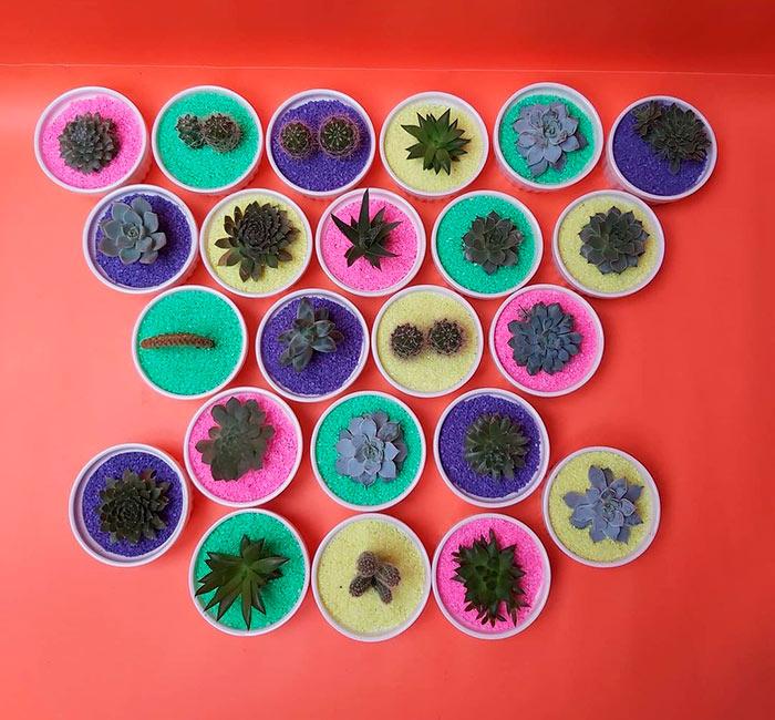 Suculentas y cactus en Osorno