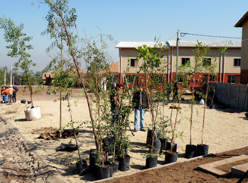Jornada de Plantación de Arboles LG & Un techo para Chile 14