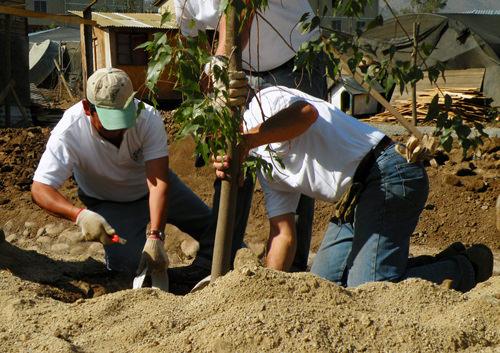 Jornada de Plantación de Arboles LG & Un techo para Chile 15