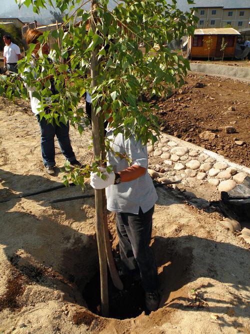 Jornada de Plantación de Arboles LG & Un techo para Chile 17