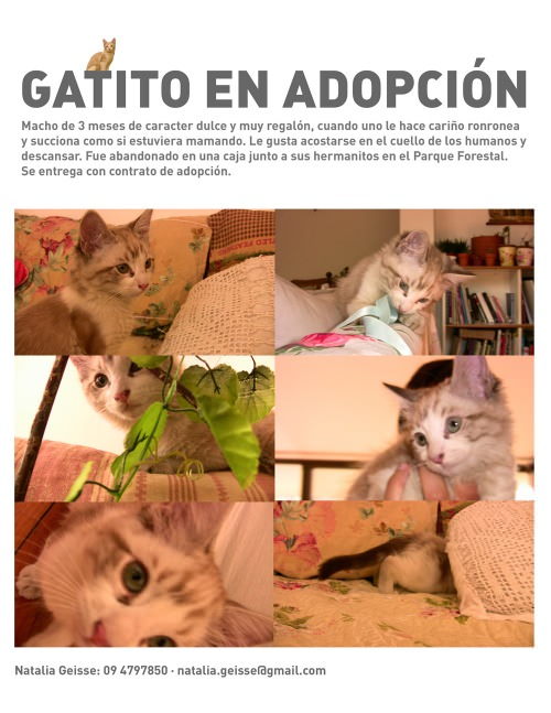 Gatitos en adopción 1