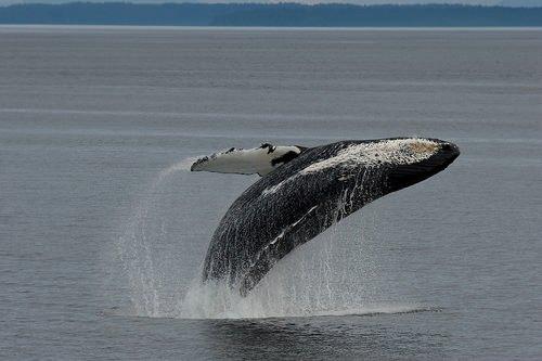 La polémica de las ballenas 3