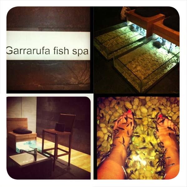 Garra rufa: peces que exfolian los pies 3
