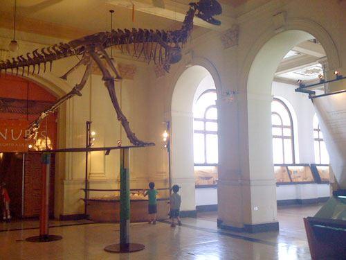 Talleres gratuitos en el Museo Nacional de Historia Natural 3