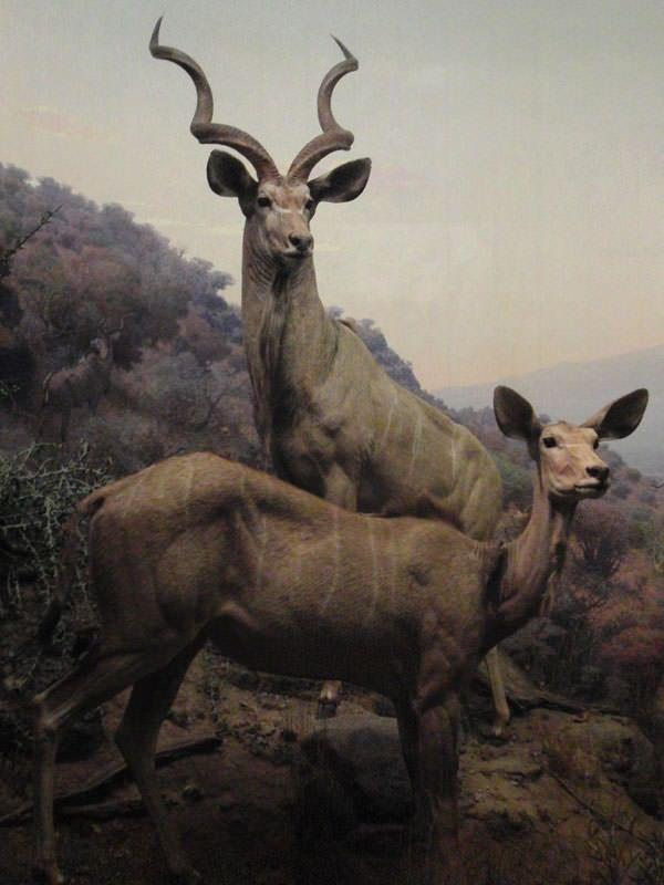 American Museum of Natural History, hay que ir alguna vez 2