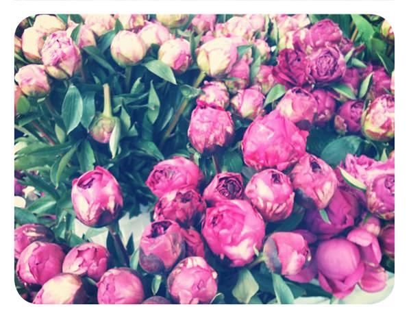 Peonías para esta primavera 3