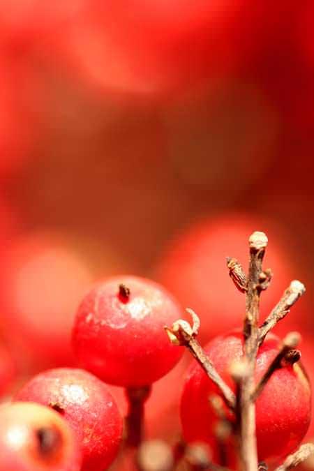 Roja-Criutort