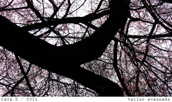 Talleres de fotografía digital 1