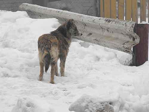 Ayuda a perritos de Coyhaique 1